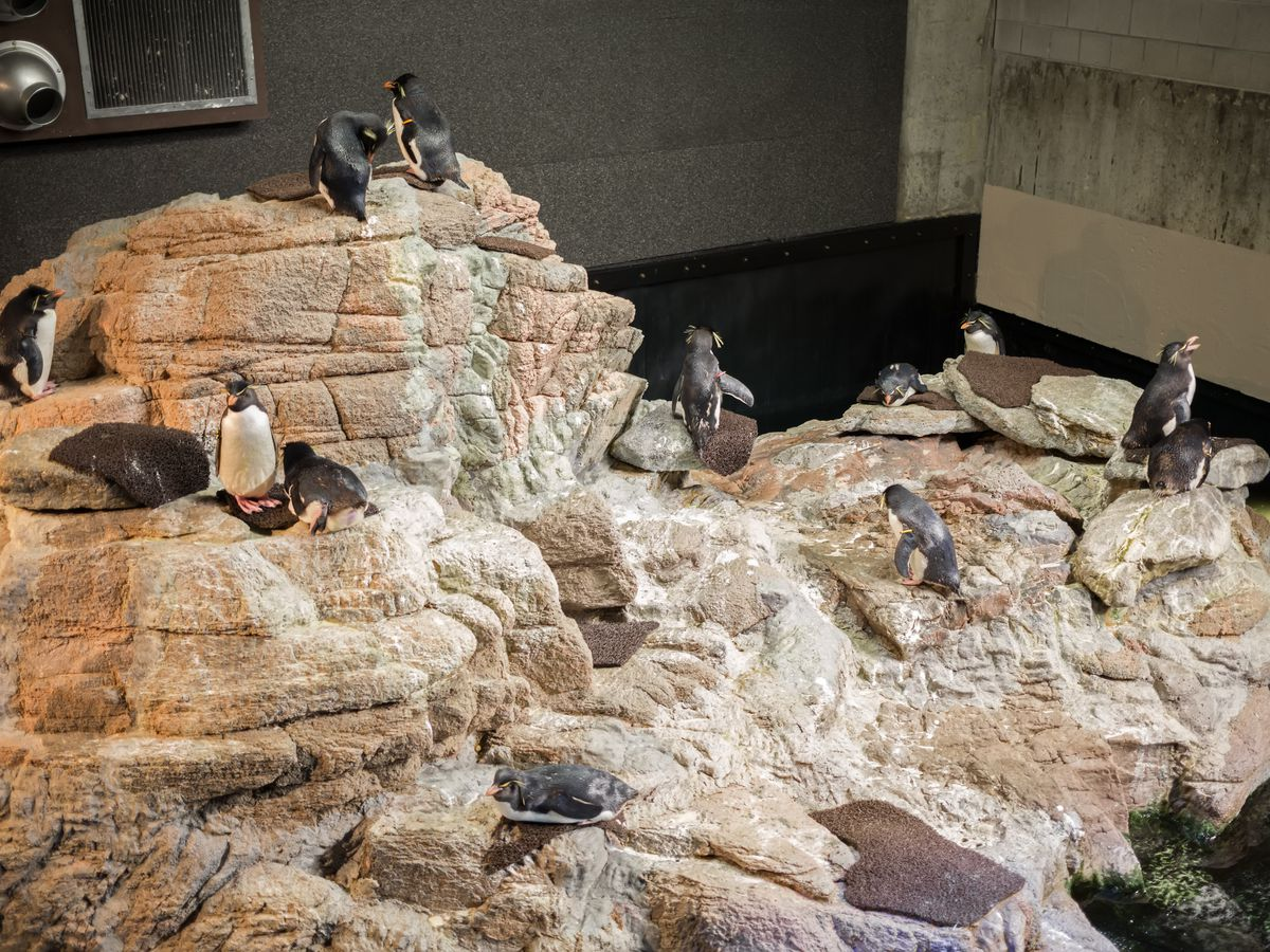 Aerial view of penguins on some rocks inside an aquarium.