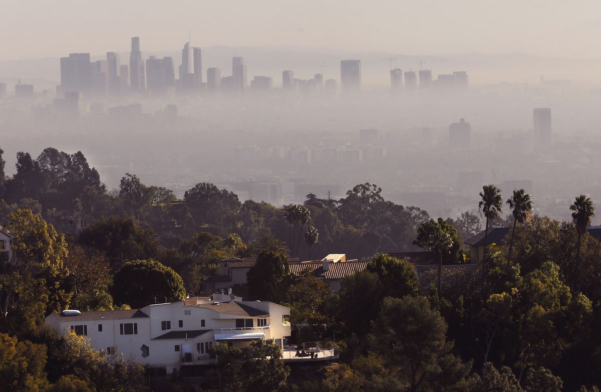 Trees Are The Most Cost Effective Way To Cool Down Urban Environment La Times Via Getty Images