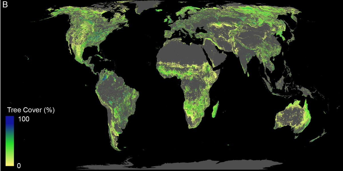 A map of the potential for forest restoration around the world.