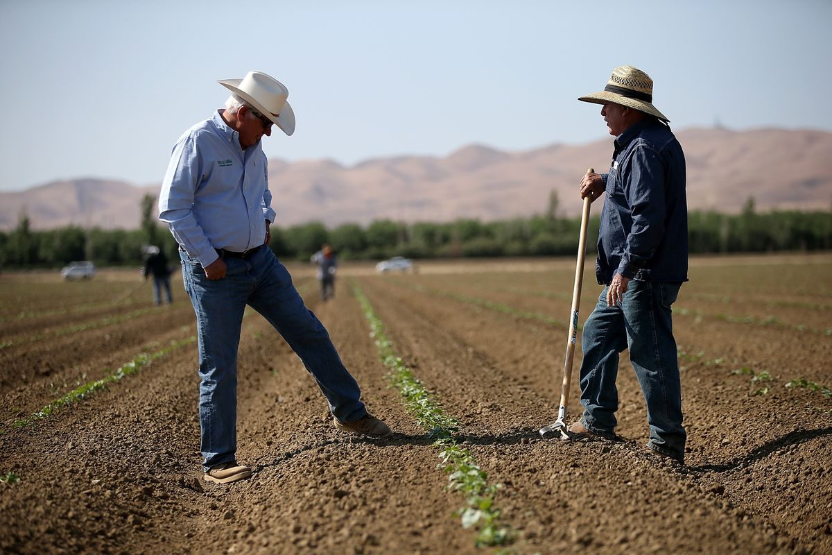As California enters its fourth year of severe drought, farmers in the Central Valley are struggling to keep their crops watered and many have opted to leave acres of the fields fallow
