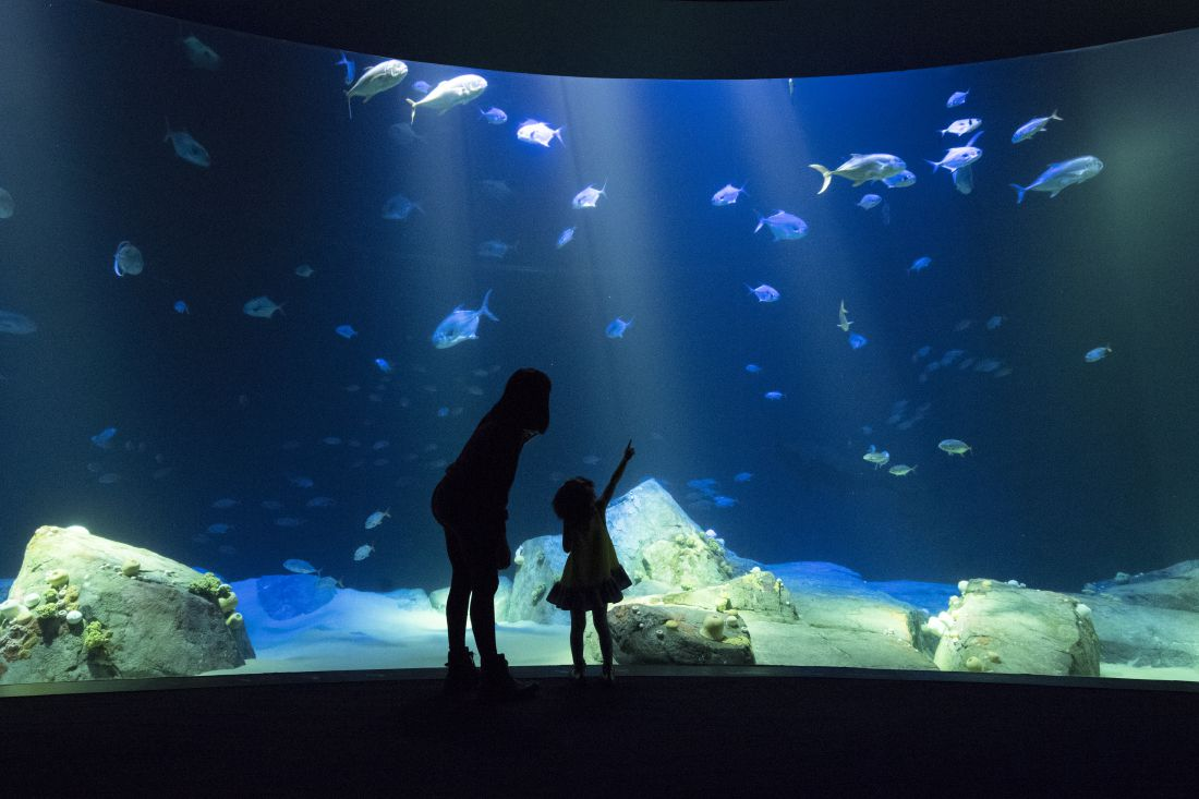 New York Aquarium Opens Its Ocean Inspired Shark Pavilion