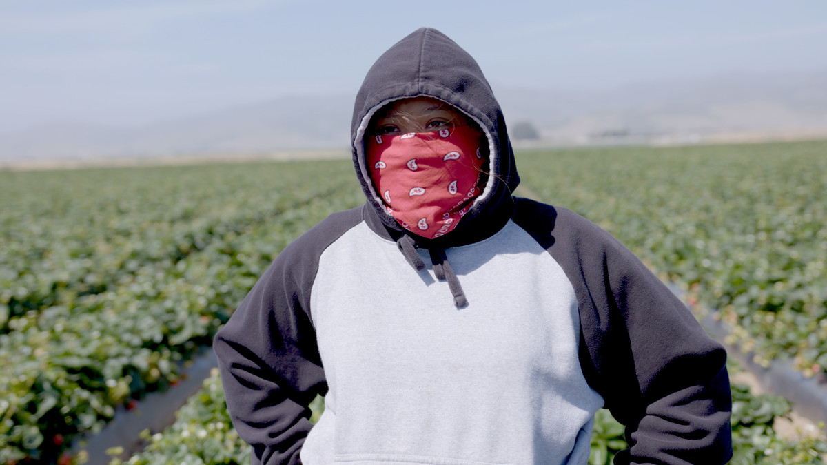 Ashley Soliz in a strawberry field from the documentary Fruits of Labor