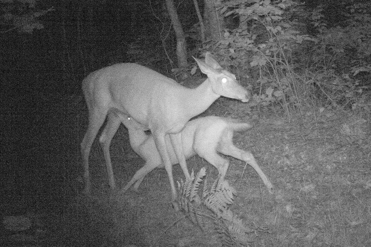 Bears/Packers impact, a nursing fawn, more on pure gas and boats and more acres around Illinois' biggest tree…