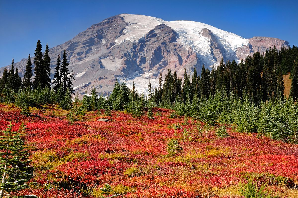 In the foreground is Paradise Meadows in Mount Rainier National Park. In the background are mountains.