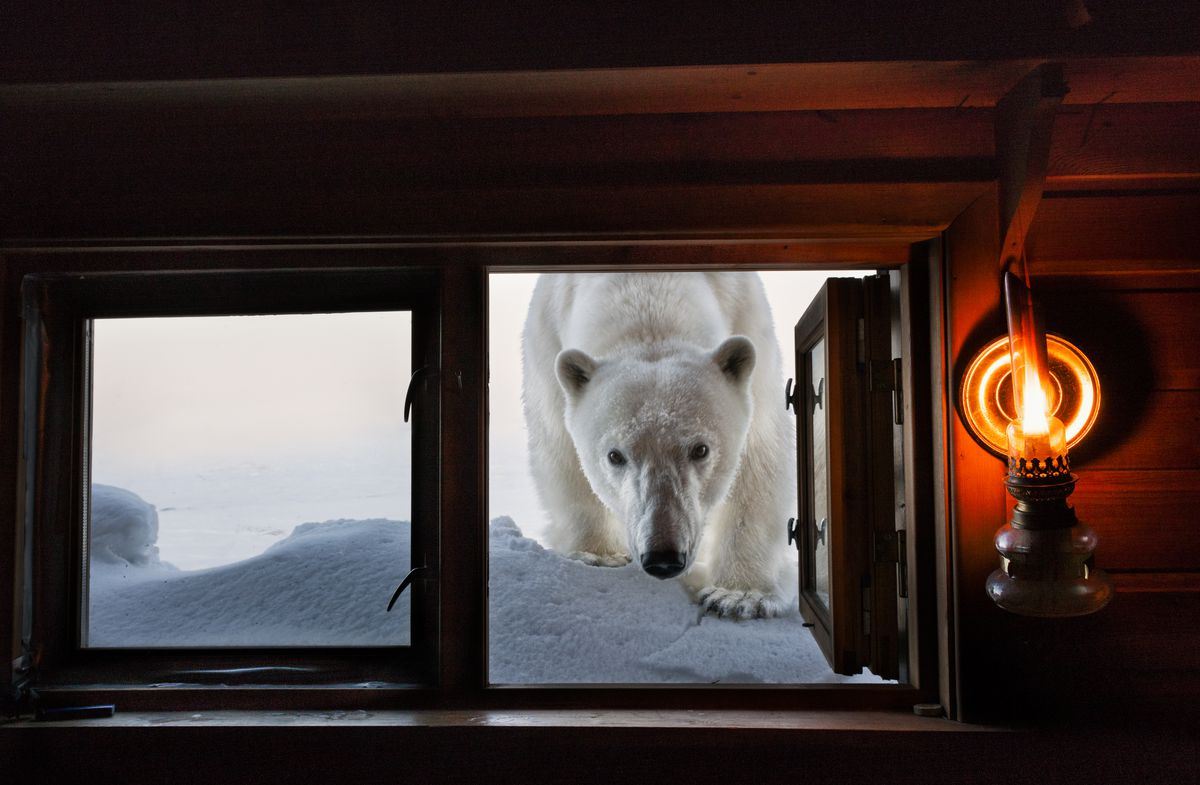 """Paul Nicklen, """"Face to Face,""""Svalbard, Norway, 2008."""