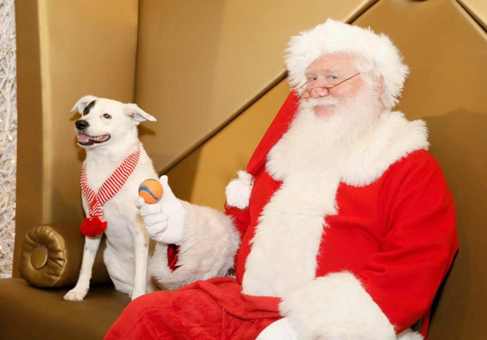 santa-pets-beverly-center_2015_11.jpg
