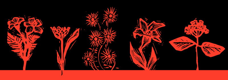 Illustrations of flowers.