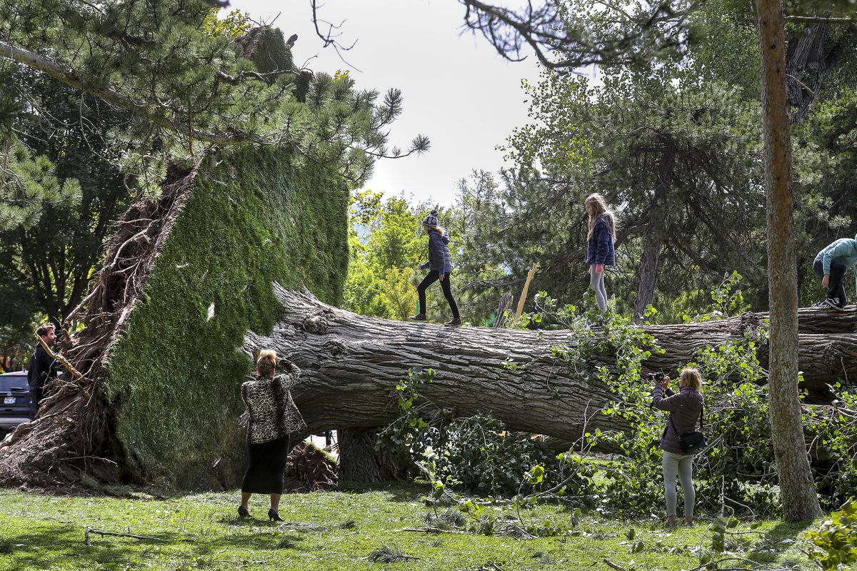 Storm toppled 1,000 trees on public property in Salt Lake City