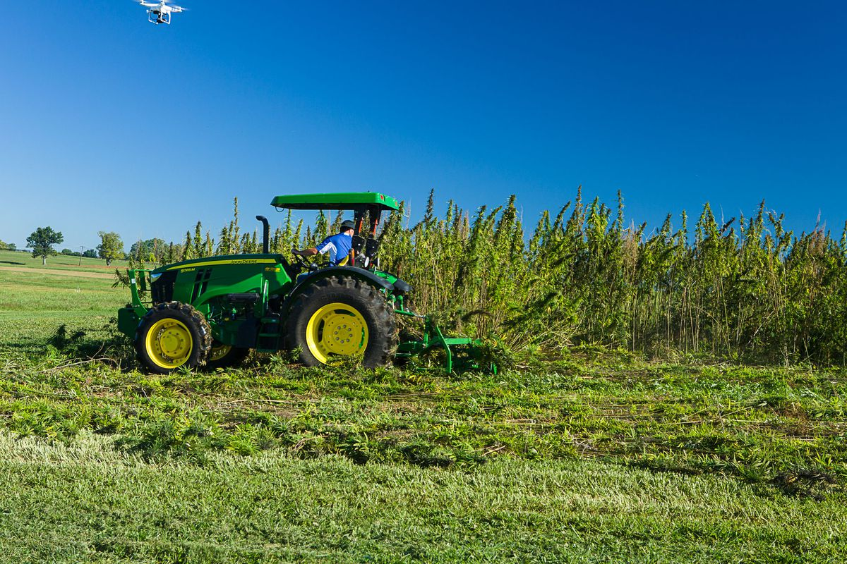 Growing hemp is about to be legal for the first time in