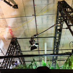 While it may look like a real forest, a glimpse behind the scenes shows the very real ceiling and light rigs hidden above
