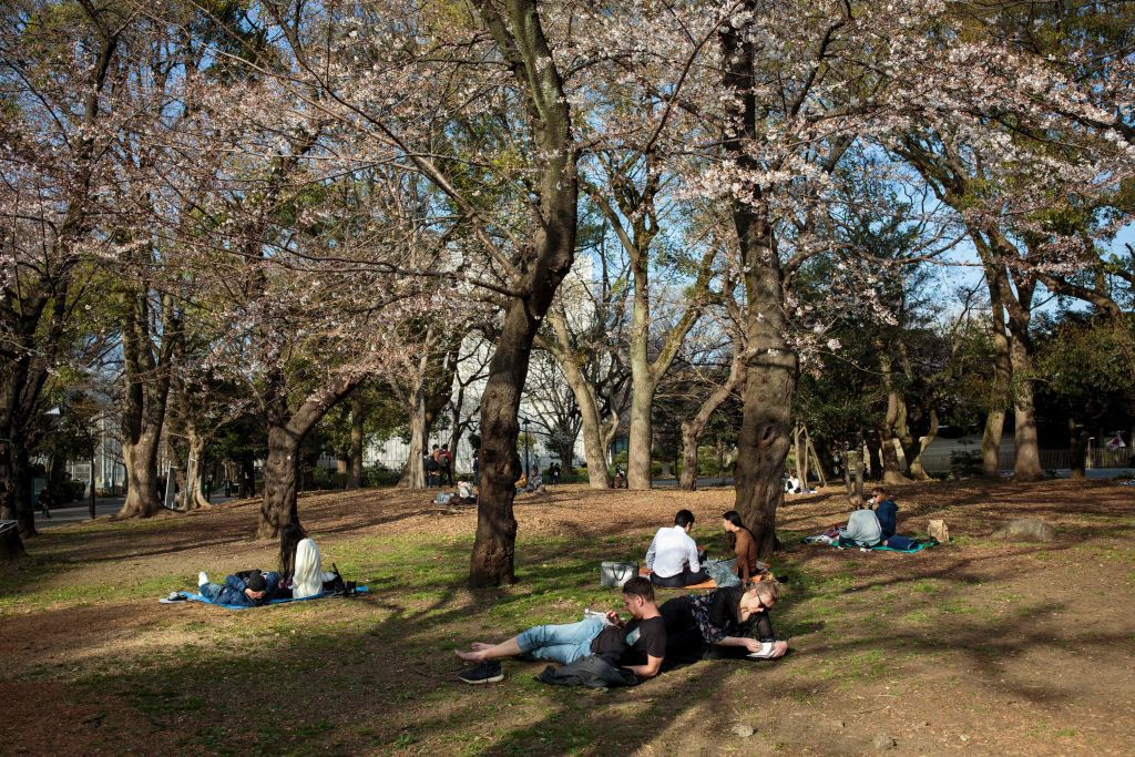A few couples picnic on blankets under cherry blossoms