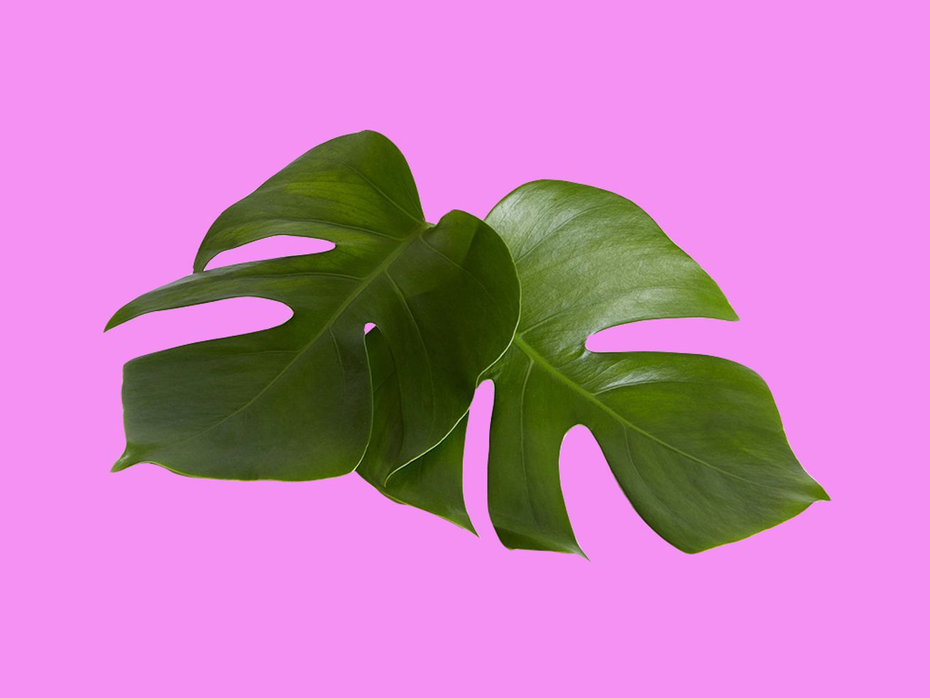 The best thing to buy for yourself this Prime Day: A houseplant