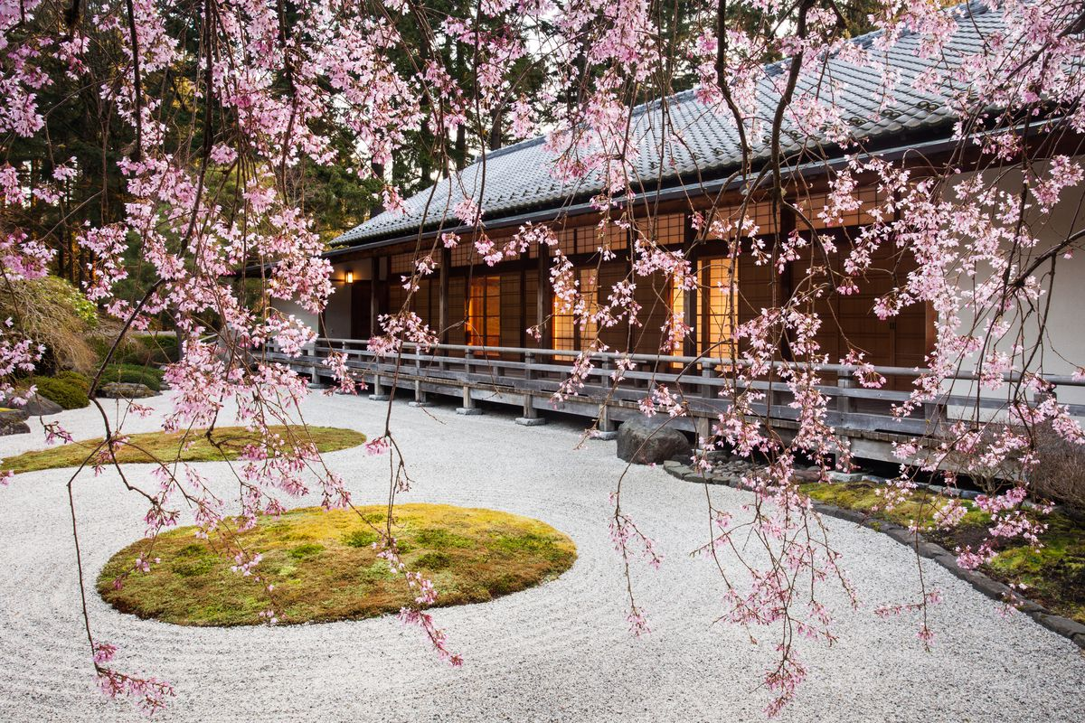 The exterior of the Flat Garden and Pavilion in the Portland Japanese Garden. The building has a grey roof. There are pink cherry blossoms in the foreground along with a courtyard with garden patches.