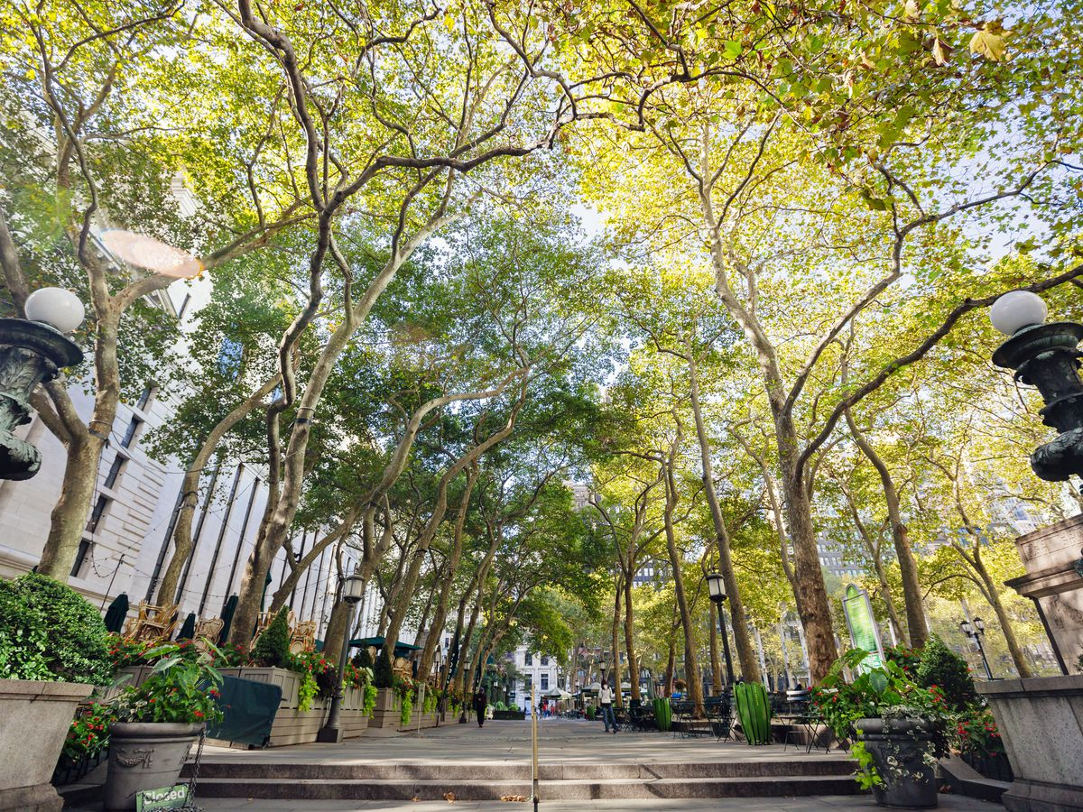 A view up into the green canopies of a tree-lined pedestrian plaza in Bryant Park.