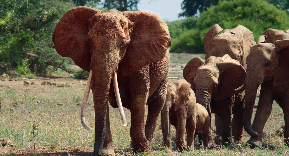 elephants in the elephant queen
