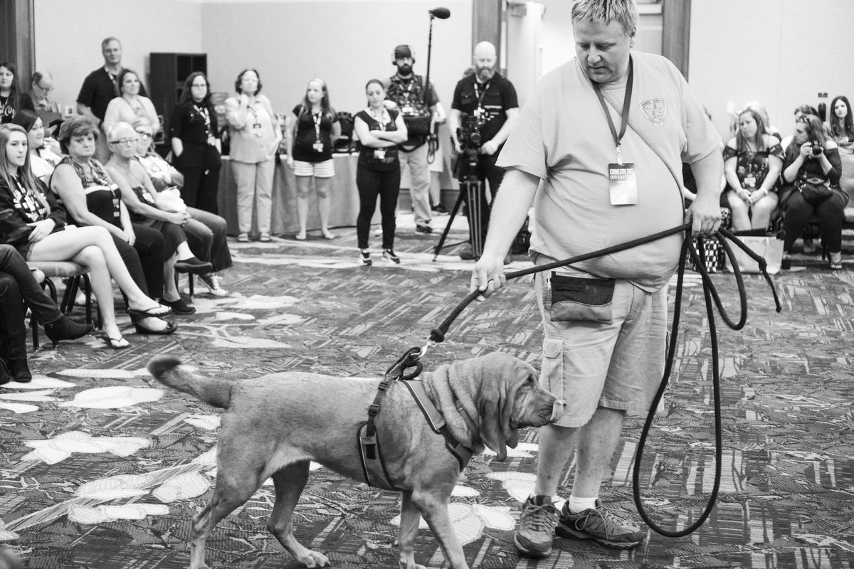 The Midwest Search Dogs were the biggest crowd-pleaser of the weekend. (Molly Fitzpatrick)