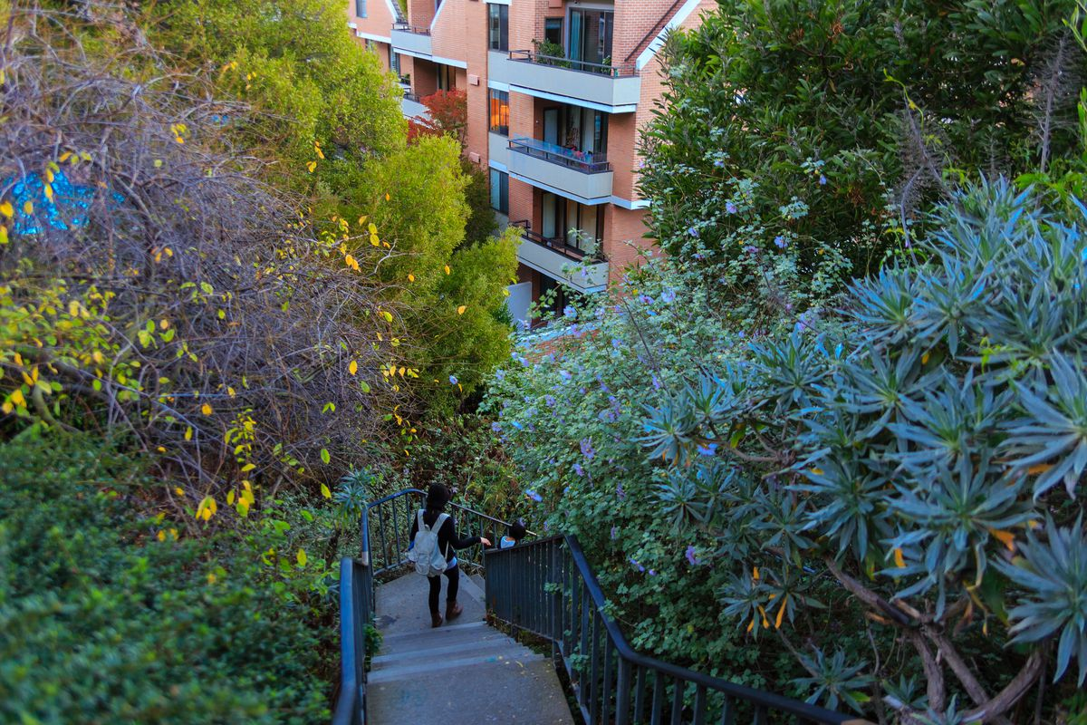 Napier Lane in San Francisco. There are steps accessing the street. There are many plants on both sides of the steps.