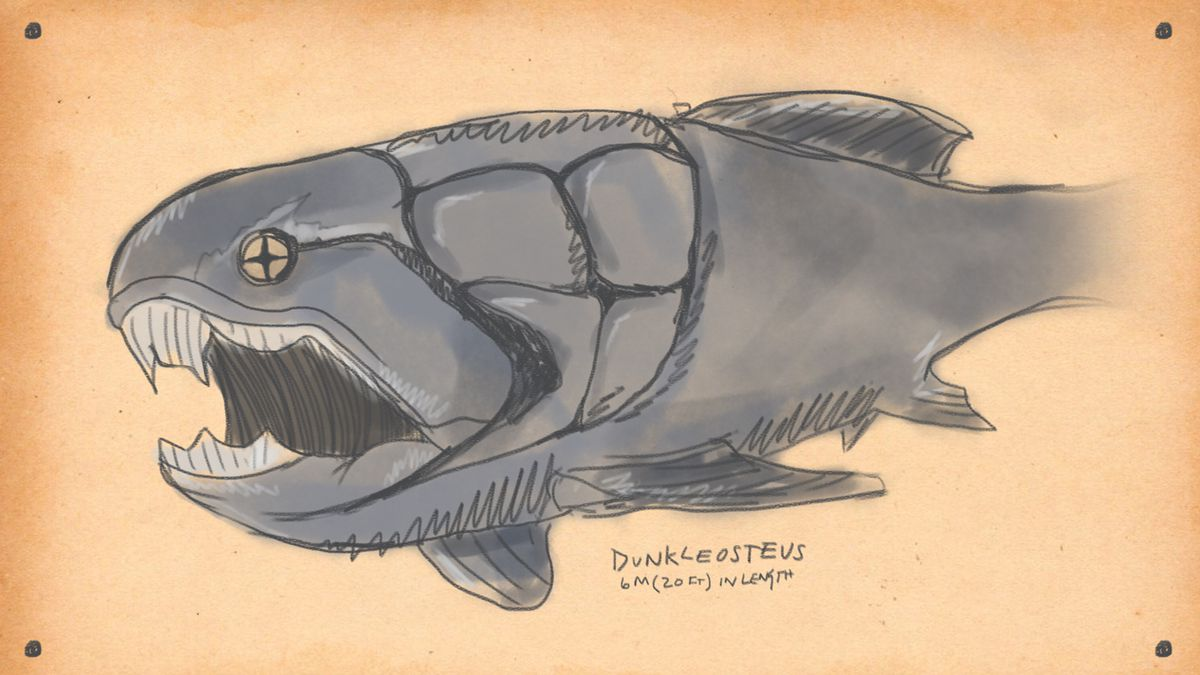 drawing of the Dunkleosteus, a giant fish whos skull is practically on the outside