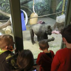 Children watch gorillas at Utah's Hogle Zoo in Salt Lake City on Wednesday, March 31, 2021. According to zoo officials, the primates missed the interaction with guests during the zoo's 50 days of closure that occurred at the onset of the coronavirus pandemic.