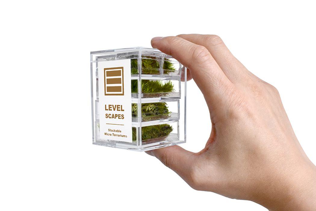Hand holding mini terrariums