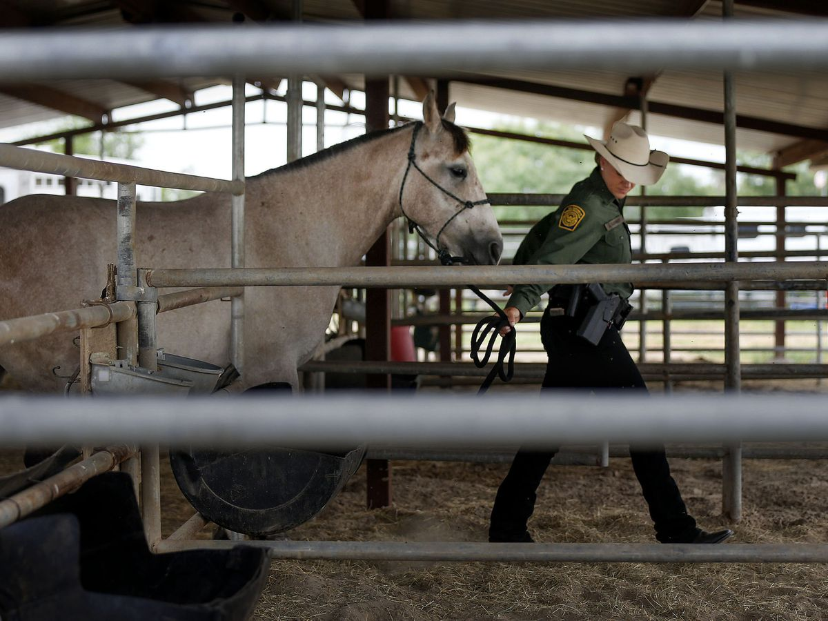 Border Patrol agent Justine Olsommer leads a horse into a corral at the Border Patrol's Rio Grande Valley Sector Headquarters in Edinburg, Texas, on Tuesday, June 22, 2021.