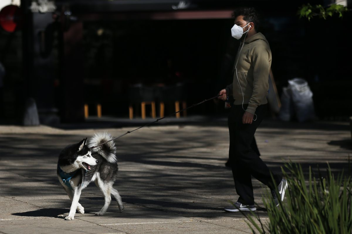 A man walks his dog along Paseo de la Reforma in Mexico City, Monday, Jan. 25, 2021, during the COVID-19 pandemic.