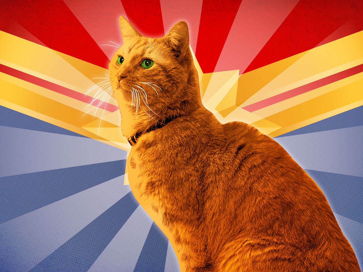 Super Cat An Unlikely Star Emerges In Captain Marvel The Ringer