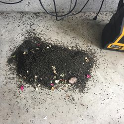 Brian and Cindy Olenslager's house in Lehi is infested with flies.  A picture taken recently in their home shows thousands of flies under a bug zapper in the garage. They aren't the only ones in the neighborhood near a mink farm having this problem.