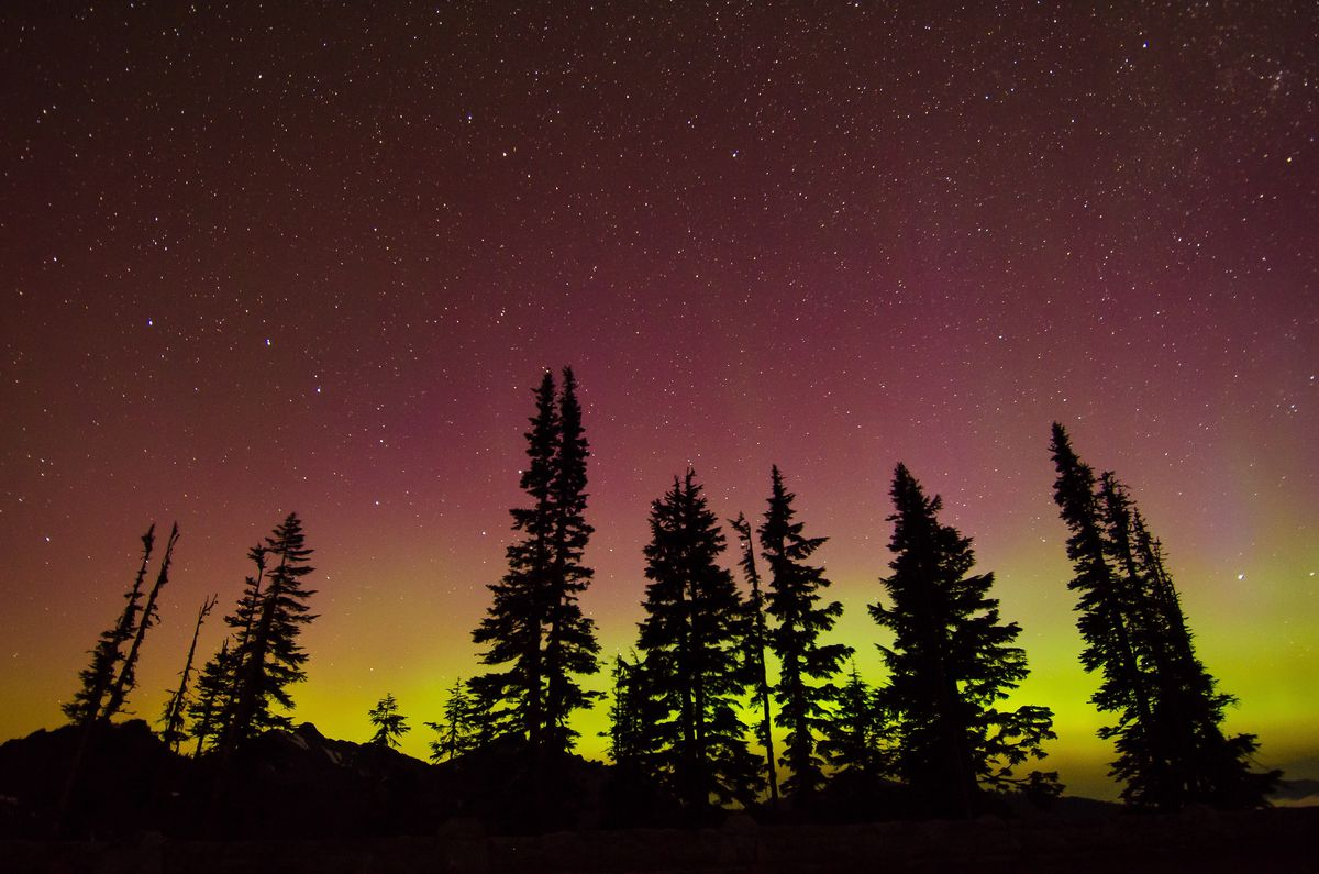 Silhouettes of evergreen trees against a starry sky that's pink on the top and yellow at the bottom.
