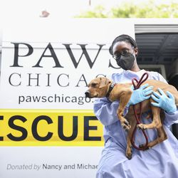 Dogs are carried from the transport van after arriving from shelters in Louisiana in the path of Hurricane Ida at PAWS Chicago Medical Center at 3516 W. 26th Street in Little Village.