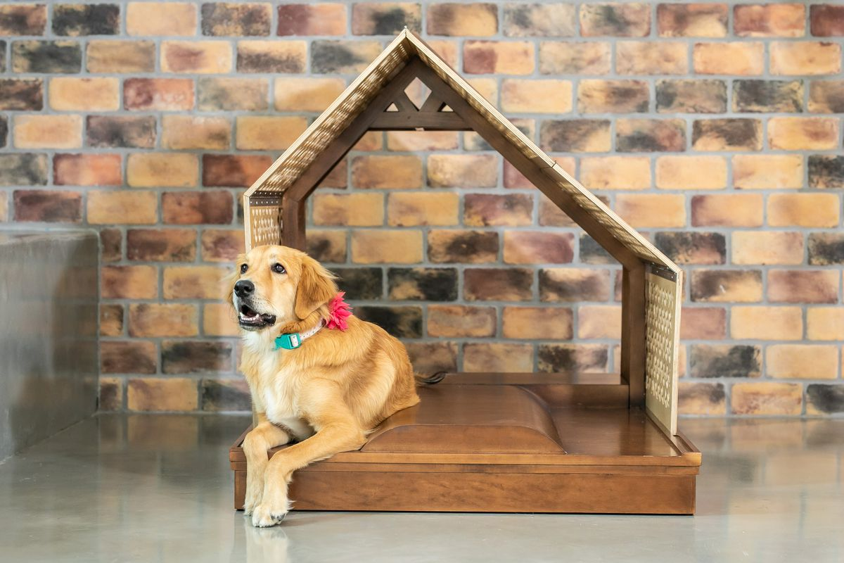 A spare structure with an angled asymmetrical roof, open on the ends, and a floor with a built-in cushion. There is a long-haired lab-looking dog lying on one side of the cushion and a brick wall in back.
