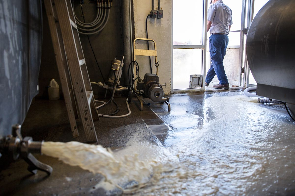 A worker walks out the door as 4,100 pounds of milk is poured down the drain at an Idaho dairy farm. Farmers are plowing under crops and dumping milk because of supply chain problems during the coronavirus pandemic.