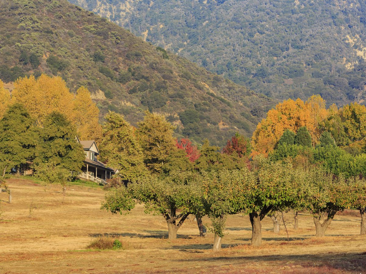 Where To Find Fall Colors Near Los Angeles Curbed La