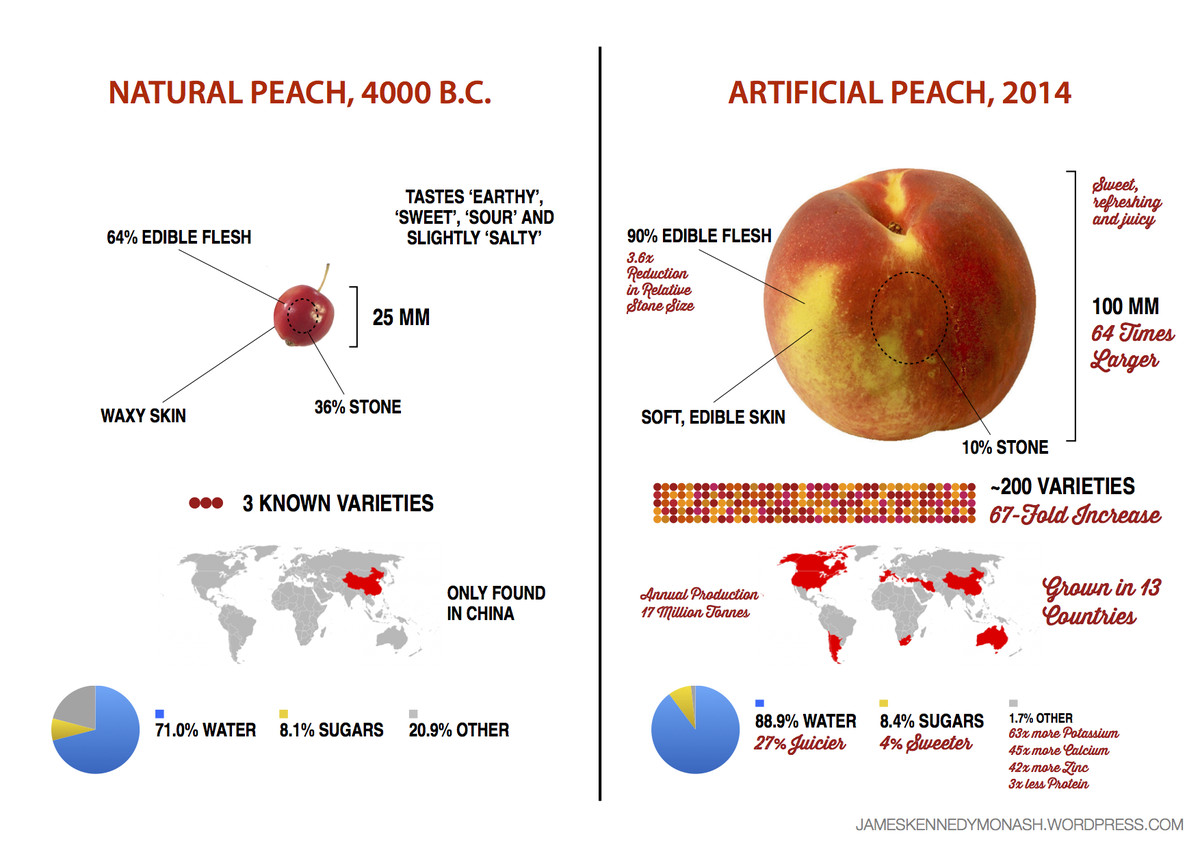 Heres What 9000 Years Of Breeding Has Done To Corn Peaches And