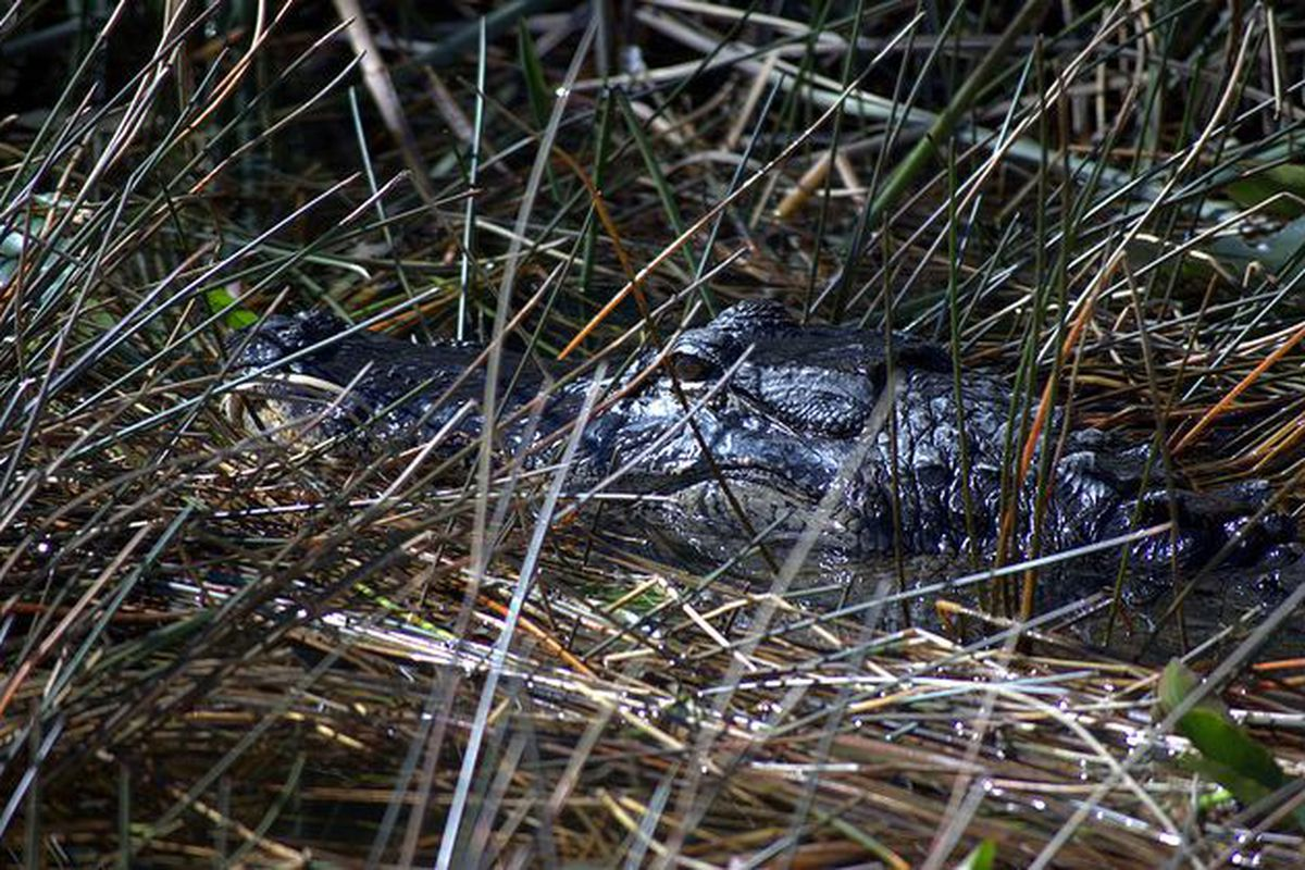 The Gators will be the hunter instead of the hunted this season.