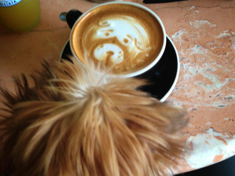 The head of a dog and a cup of latte