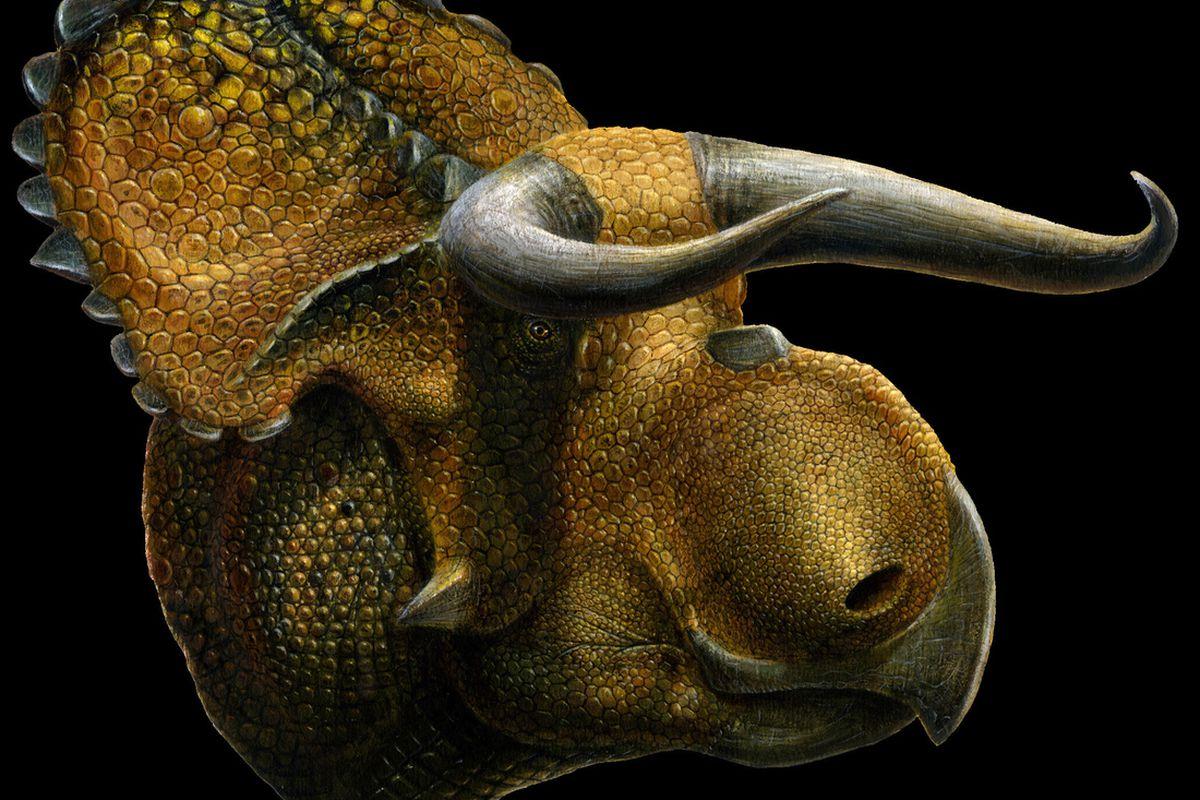 Nasutoceratops Titusi from natural history museum of utah