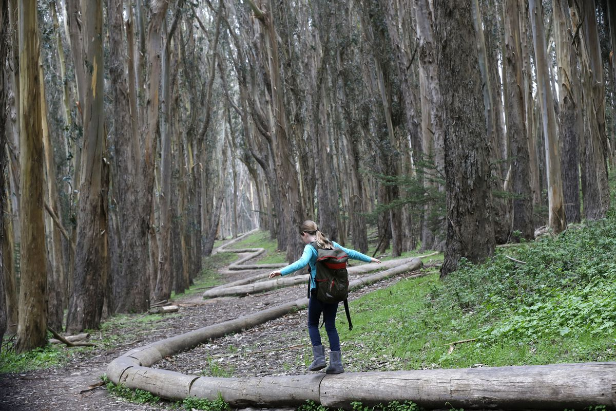 A forest with tall green trees. A girl walk on top of a snaking wood sculpture.