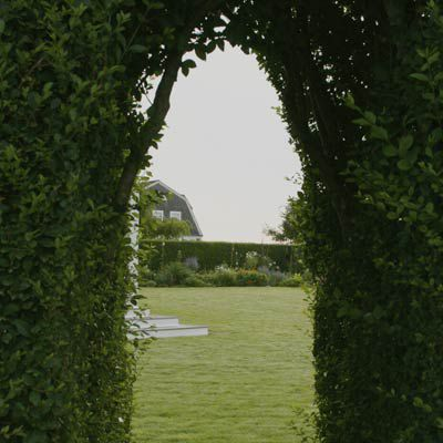 Privet Hedge With Natural Arch