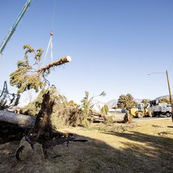 Sean Drake watches as Hang M High Crane Service crews move a portion of one of two large pine treethat were felled by high winds in Lyle Bair's yard in Washington Terrace on Tuesday, Jan. 19, 2021.One of the trees landed on Bair's home, damaging his carport, his car and other items.