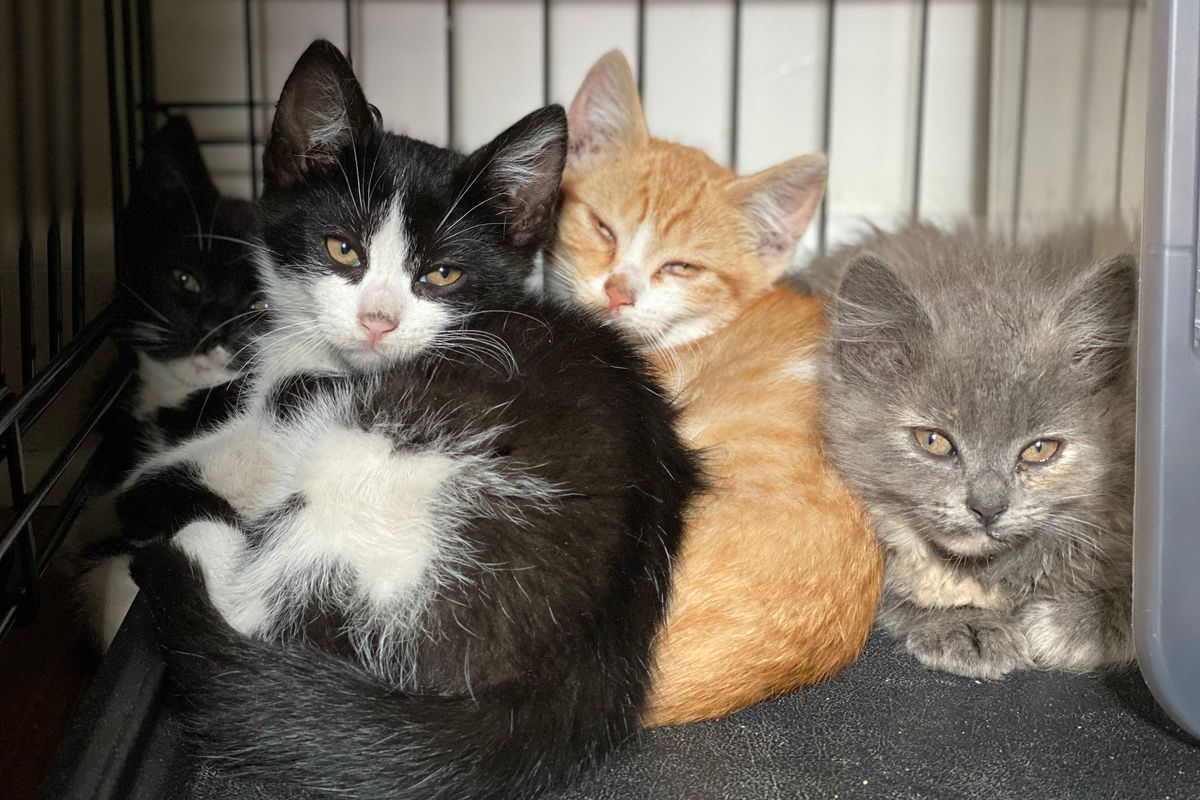 The nonprofit Flatbush Cats helps to tame the population of feral felines through the trap-neuter-return (TNR) method.