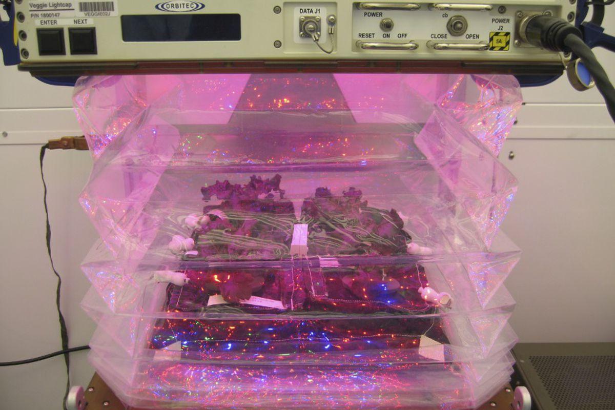 Space vegetable
