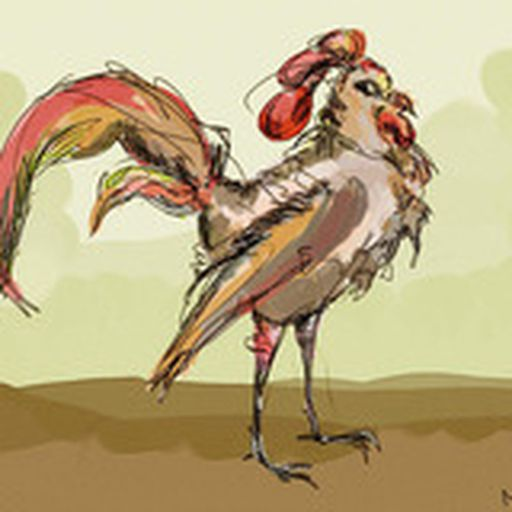 gallo del cielo