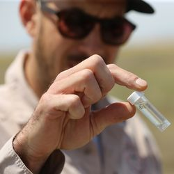 Quinten Salt, rural field supervisor with the Salt Lake City Mosquito Abatement District, holds a vial of mosquito larva as abatement employees spread larvicide at the Rudy Duck Club in North Salt Lake on Monday, May 11, 2020.
