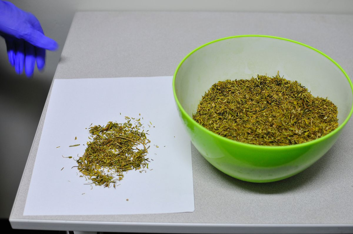 Marijuana meant for research.