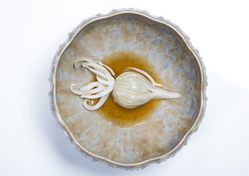 A cooked squid, plated simply in a decorative ceramic dish in a small pool of sauce