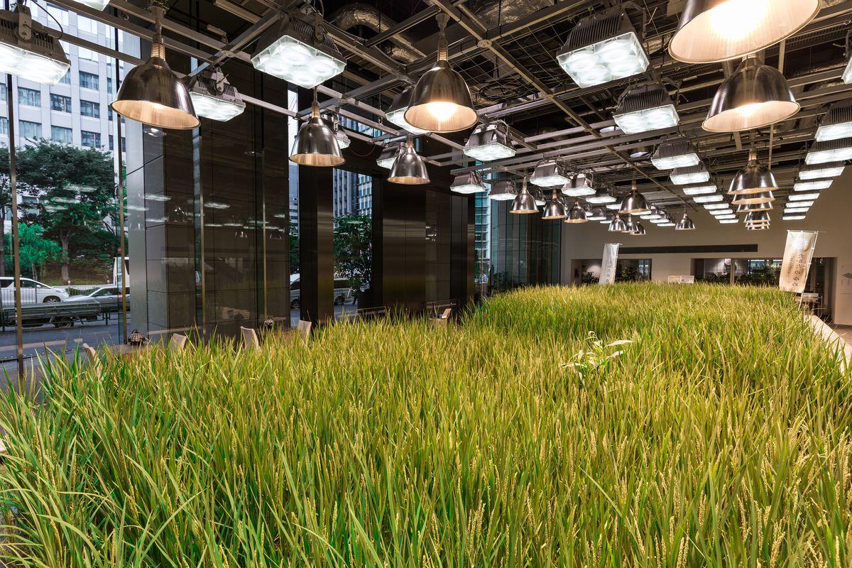 japan rice office building