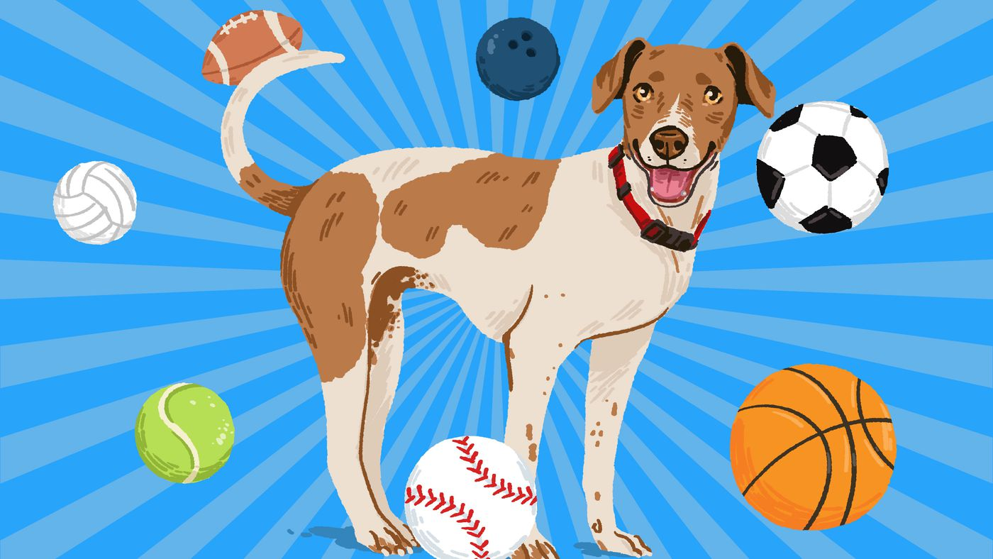 The Pro Athletes' Guide to Embarrassing Your Dog in Basic Sporting Endeavors