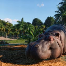 A not-so-hungry hippo in <em>Planet Zoo</em> for Windows PC.