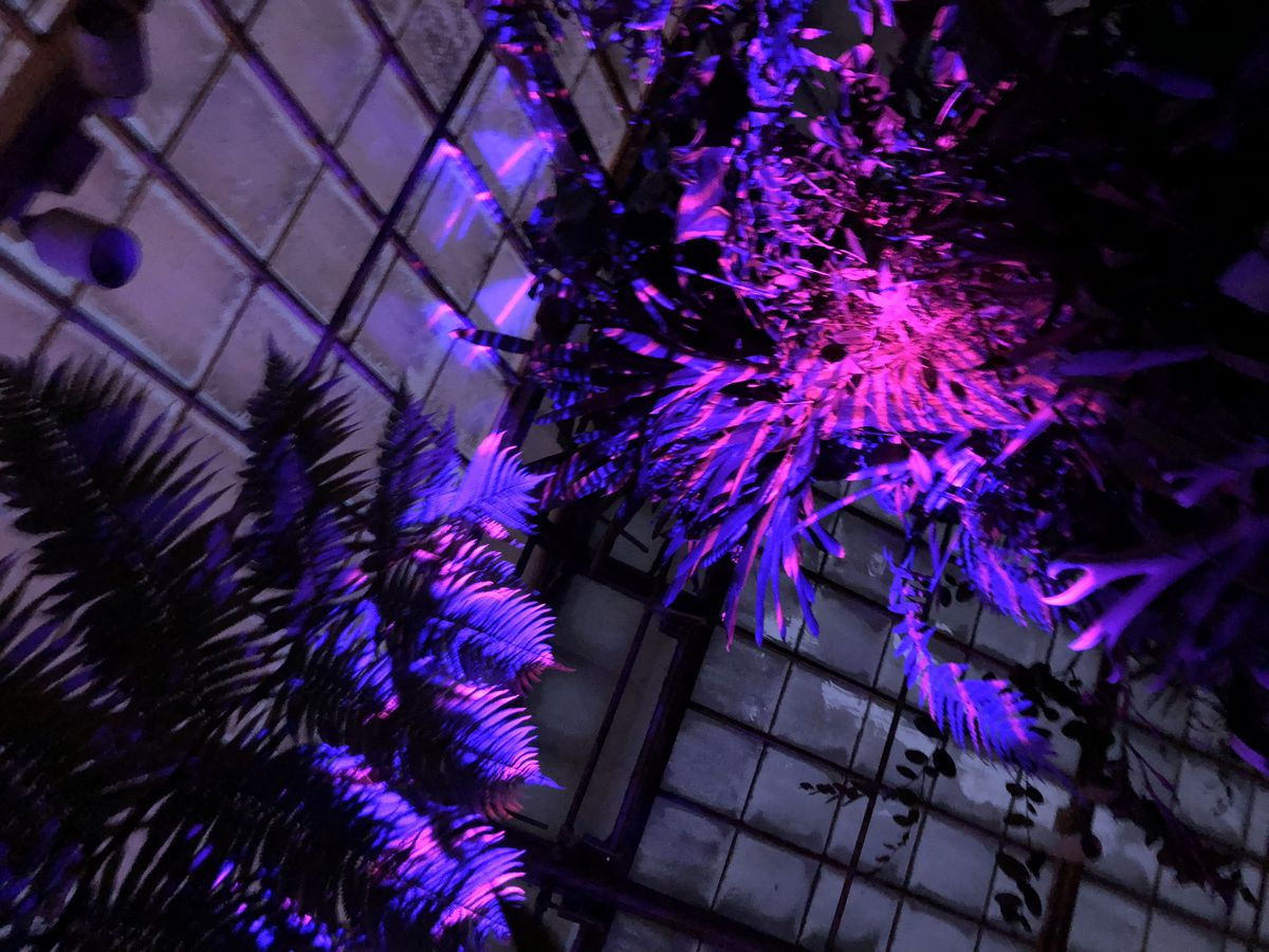 Nighttime light and sound installation coming to